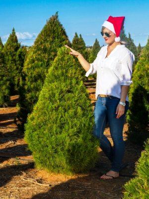 Live Christmas Trees 3 Foot Premium