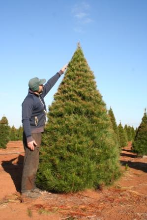 Xmas Tree 8 Foot Traditional